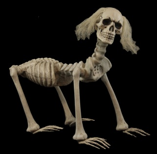 dogskeleton.jpeg